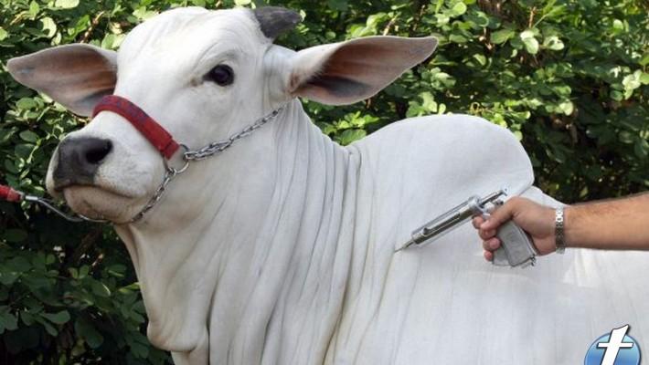 Para garantir a comercialização da produção, o proprietário dos animais não pode descuidar.
